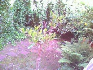 Un potager dans la caillasse urbaine. dans Potagers jardin-vue-densemble1-300x225