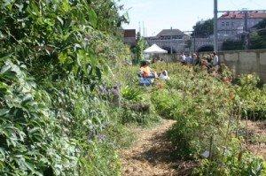 Premiers pas aux jardins participatifs d'Etterbeek (Bruxelles). dans Potagers jardins-participatifs-1-300x199